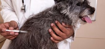 Importance Of Puppy And Dog Vaccination